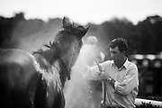 April 29, 2017, 22nd annual Queen's Cup Steeplechase. Trainer Jack Fisher sprays down a horse after the a race.