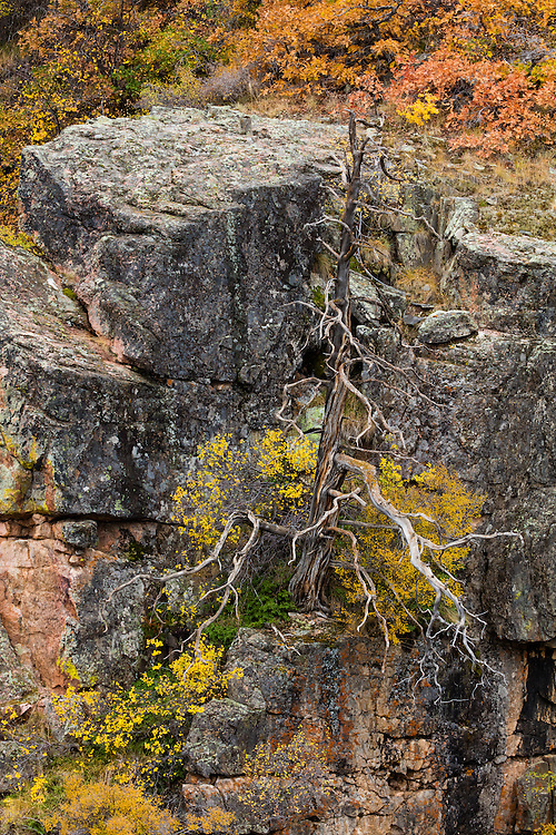 http://Duncan.co/dead-tree-at-black-canyon-of-the-gunnison/ 