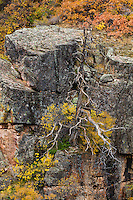 http://Duncan.co/dead-tree-at-black-canyon-of-the-gunnison/ ‎