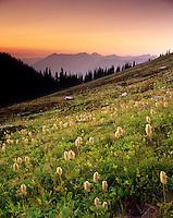 Alpine meadows at dusk near Buck Creek Pass, Glacier Peak Wilderness Washington USA