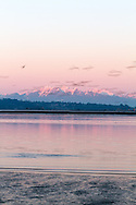 A flock of Canada Geese (Branta canadensis) fly in in front of Mount Blanshard (The Golden Ears) and Mount Robbie Reid and above the banks of the Nicomeckl River. Photographed from Blackie Spit/Crescent Beach in Surrey, British Columbia, Canada