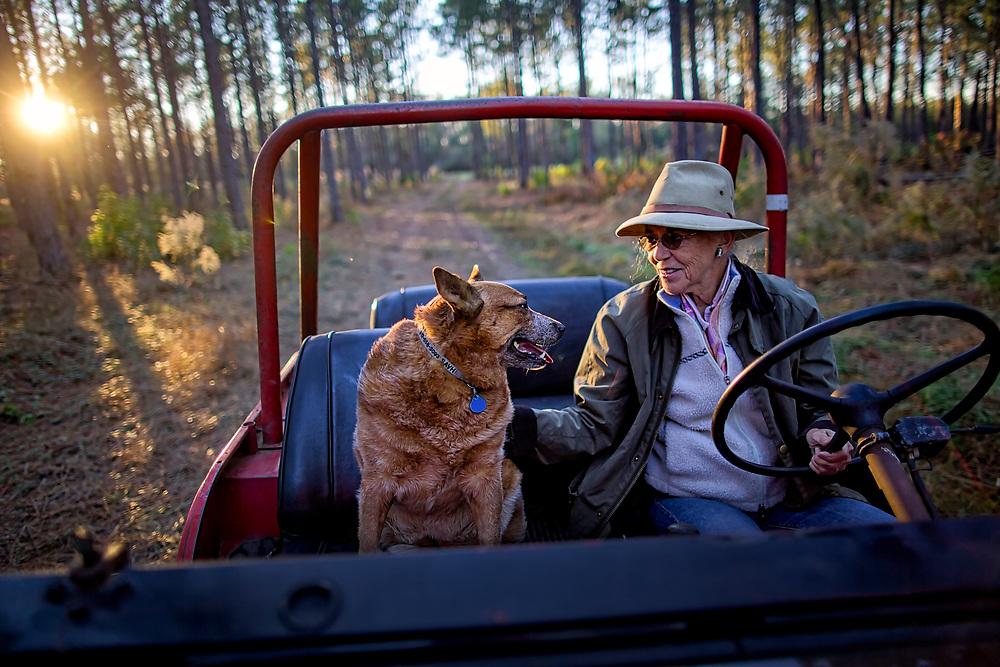 OLIVER, GA - DEC., 15, 2016: Lynda Beam and her Australian Healer Lila drive on her TooHolly farm, Thursday, December 15, 2016, in Oliver, Ga. (Photo by Stephen B. Morton for Georgia Forestry Magazine)
