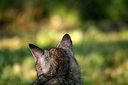Straßen- und Hauskatze Speedy auf einer Decke im Garten.<br /> <br /> Street- and housecat Speedy in the garden.