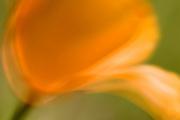 Poppy, California