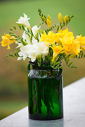 Yellow and white freesias in a green glass vase
