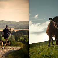 Beef and Lamb NZ