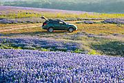 My faithful bluebonnet companion, the Subaru Outback, Muleshoe Bend, Spicewood, Texas