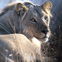 Photo by Shmuel Thaler<br /> www.shmuelthaler.com<br /> shmuel_thaler@yahoo.com<br /> +01-831-706-7513