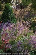 Autumn border with Perovskia 'Blue Spire', Persicaria affinis 'Superba' RHS, Stipa gigantea, Verbena bonariensis and Buxus - box pyramid, September