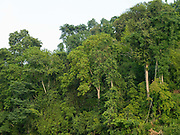 Forest along the banks of the Nam Ou river in Ban Tang, Phongsaly province, Lao PDR