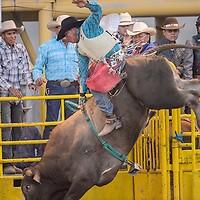 Bull rider Cody Teller tries to hold on as his bull makes a high kick during the Navajo Nation Fair Rodeo Friday in Window Rock.