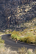 A bike rider on the Scenic Drive through Red Rock Canyon, Las Vegas, Nevada.
