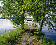 A path going underneath birch trees to the swimming platform in Lake Jyvasjarvi, Jyvaskyla, Central Finland. Jyvaskyla is the capital of Central Finland and the largest city in the Finnish Lakeland, an area of more than 188,000 lakes. During the warm summer months swimming in the lake around the city is a popular activity.