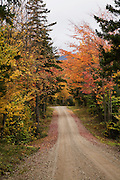 Country road through yellow and red leafed trees.
