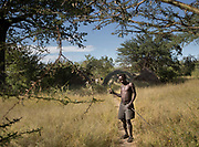 Isaya getting a piece of wood to make a bow. At the Hadza camp of Senkele.