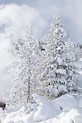 Frosty trees and steam during winter at Mud Volcano Thermal Area in Yellowstone