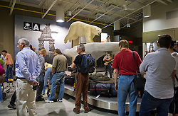 Passengers wait for the baggage in the Yellowknife airport in the Northwest Territories in Canada July 19, 2011. A polar bear decorates the airport but no bears are found for at least a hundred miles farther North. (Photo by Ami Vitale)
