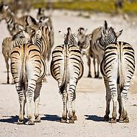 Namibia: Safari (2017)