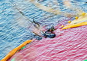 JAPAN DOLPHIN SLAUGHTER