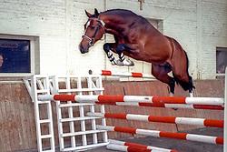 Heartbreaker<br /> Hengstenkeuring BWP 1992<br /> Photo © Hippo Foto