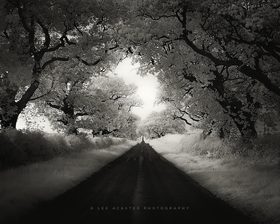 Not quite the dark hedges, but I do like this road up near Belvoir Castle in Nottinghamshire