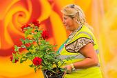 Hampton Court RHS Flower Show
