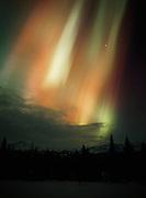 Curtain of northern lights above birch and spruce forest near Cottonwood Creek, Matanuska Valley, Alaska.