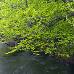 The Ipswich River in Essex County Massachusetts USA