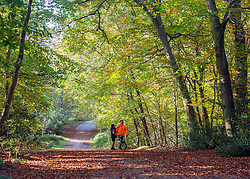 © Licensed to London News Pictures. 27/10/2014. Burnham, UK. A young boy and his father look at the trees.  People walk through the autumnal trees in the mooring sunshine at Burnham Beeches an area of 220 hectares of ancient woodland in Burnham, Buckinghamshire. Today 27th October 2014. Photo credit : Stephen Simpson/LNP