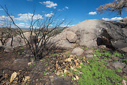 Damage from the Yarnell Hill Fire in July, 2013, in the rocks surrounding Carraro's Gratto in Yarnell, Arizona.