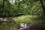 pond in the Wahner Heath, moorland waters, Cologne, North Rhine-Westphalia, Germany. <br /> <br /> Teich in der Wahner Heide, Moorgewaesser, Koeln, Nordrhein-Westfalen, Deutschland.