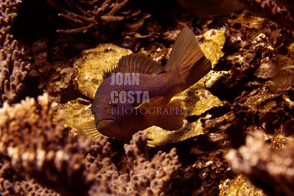 03/April/2013 Western Australia.UWA researchers working at Abrolhos Islands..©JOAN COSTA.