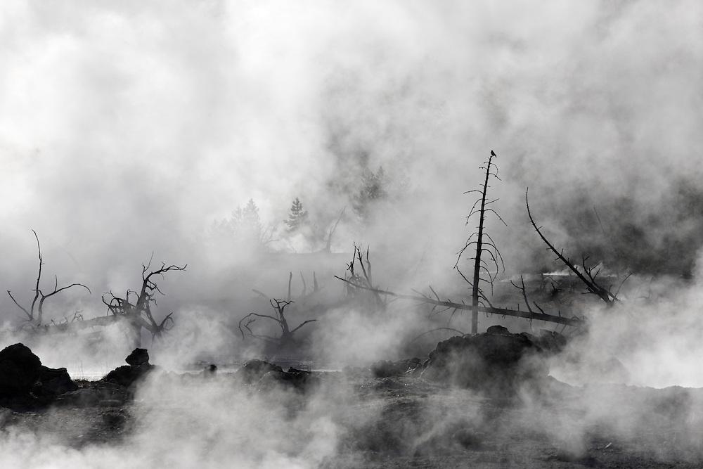 Vapores matinales de agua termal, Norris Geyser Basin, Yellowstone NP, Wyoming (Estados Unidos)