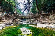 Mawlynnong living root bridge, Meghalaya, India