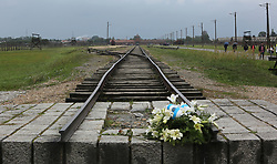 Commemorative flowers on the rail track in Auschwitz II-Birkenau Nazi concentration camp, in Auschwitz, Poland on September 3, 2017. Auschwitz concentration camp was a network of German Nazi concentration camps and extermination camps built and operated by the Third Reich in Polish areas annexed by Nazi Germany during WWII. It consisted of Auschwitz I (the original camp), Auschwitz II–Birkenau (a combination concentration/extermination camp), Auschwitz II–Monowitz (a labor camp to staff an IG Farben factory), and 45 satellite camps. In September 1941, Auschwitz II–Birkenau went on to become a major site of the Nazi Final Solution to the Jewish Question. From early 1942 until late 1944, transport trains delivered Jews to the camp's gas chambers from all over German-occupied Europe, where they were killed en masse with the pesticide Zyklon B. An estimated 1.3 million people were sent to the camp, of whom at least 1.1million died. Around 90 percent of those killed were Jewish; approximately 1 in 6 Jews killed in the Holocaust died at the camp. Others deported to Auschwitz included 150,000 Poles, 23,000 Romani and Sinti, 15,000 Soviet prisoners of war, 400 Jehovah's Witnesses, and tens of thousands of others of diverse nationalities, including an unknown number of homosexuals. Many of those not killed in the gas chambers died of starvation, forced labor, infectious diseases, individual executions, and medical experiments. In 1947, Poland founded a museum on the site of Auschwitz I and II, and in 1979, it was named a UNESCO World Heritage Site. Photo by Somer/ABACAPRESS.COM