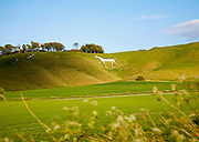 White horse in chalk scarp slope Cherhill, Wiltshire, England dating form 1780