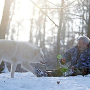 German wolf researcher Werner Freund, 79, holds out a treat as an Arctic wolf comes close in an enclosure at the wolves park in Merzig in the German province of Saarland January 24, 2013. Freund established a home for wolves in 1972 and raised more than 70 animals in the last 30 years. Freund had to become a wolf among wolves to be accepted by the pack. Picture taken January 24, 2013.  REUTERS/Lisi Niesner  (GERMANY)