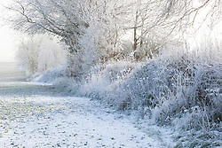 Winter hedgerow with frost and snow