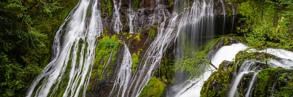 Panther Creek Falls streams down the canyon walls among the green moss of Spring in the Columbia River Gorge.