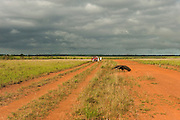 Giant Anteater (Myrmecophaga tridactyla) & Tourists<br /> Savannah<br /> Rupununi<br /> GUYANA. South America<br /> RANGE: Central and South America