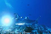 underwater photographer and silvertip shark, Carcharhinus albimarginatus, Rangiroa Atoll, French Polynesia ( South Pacific Ocean )