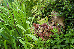 Log placed to attract wildlife and planted up with sempervivums ( houseleeks ). Foliage of Iris 'Gerald Derby'