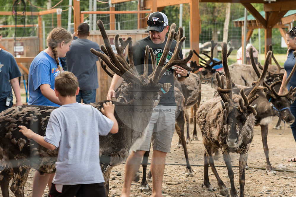 Tourists visit with live reindeer at the Santa Claus House in North Pole, Alaska. The Christmas shop is open all year and a popular tourist destination.
