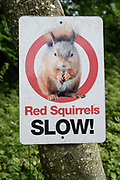 """""""Red Squirrels SLOW!"""" sign. Brownber Hall Country House near Kirkby Stephen, in Yorkshire Dales National Park, Cumbria county, England, United Kingdom, Europe. England Coast to Coast hike day 6 of 14: Ullswater to Kirkby Stephen. [This image, commissioned by Wilderness Travel, is not available to any other agency providing group travel in the UK, but may otherwise be licensable from Tom Dempsey – please inquire at PhotoSeek.com.]"""