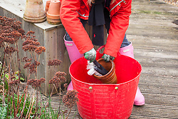 Cleaning terracotta pots in winter with a hand brush and bucket of warm water