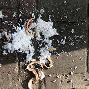 Nederland Rotterdam 6 november 2008 20081106 Foto: David Rozing .Rijst en brood op straat / pleintje in wijk het oude westen, omgeving van speyckstraat / eerste 1e middelandstraat. Moslims bijvoorbeeld mogen volgens de Islam geen brood weggooien, in plaats hiervan wordt het daarom vaak aan de vogels gevoerd en blijft het liggen op verschillende plekken in de wijk. ..Foto: David Rozing