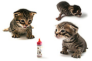 Collage of 3 images of a curious one week old kitten in various poses of enquiry