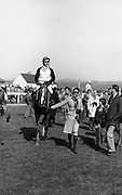 """Racing At Punchestown.     K22..1976..28.04.1976..04.28.1976..28th April 1976..The John Jameson Cup race was run today at Punchestown. The sponsor of the race are Irish Distillers Ltd. The race an extended handicap novice steeplechase is for horses four years old and upwards that have not won a steeplechase on or before 1st Sept.,75..The race was won by """"No Hill"""" owned by Mrs J.B.O'Callaghan,ridden by Mr T.M.Walsh and trained by Mr R Walsh...Image shows """"No Hill"""" under jockey T.M.Walsh being led to the winners' enclosure."""