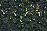 close up of green sprouts