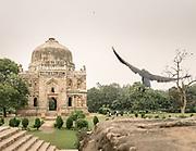 A bird takes flight in the Lodi gardens.